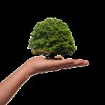 ekologiczny mikołów