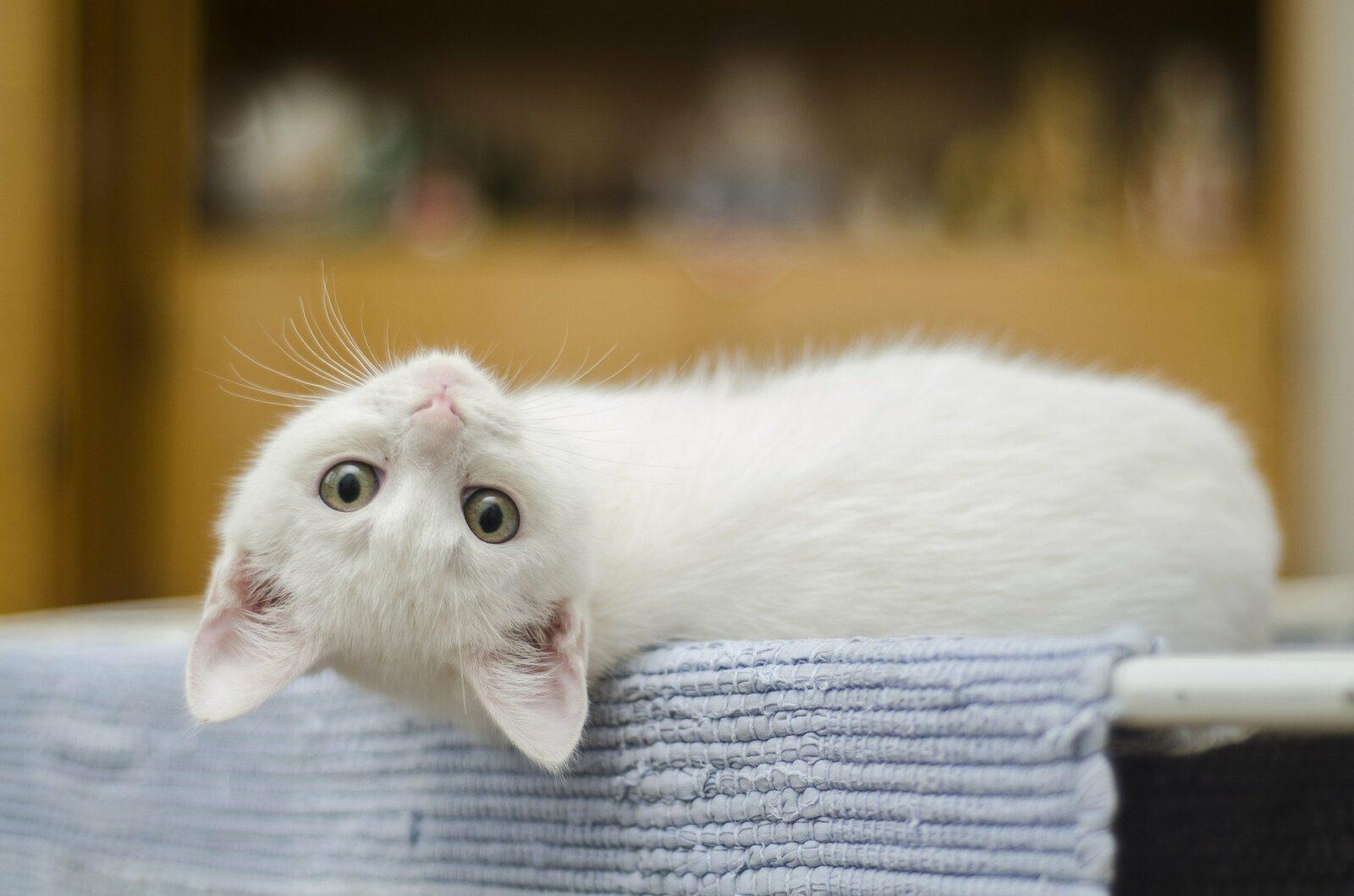 schronisko kotów